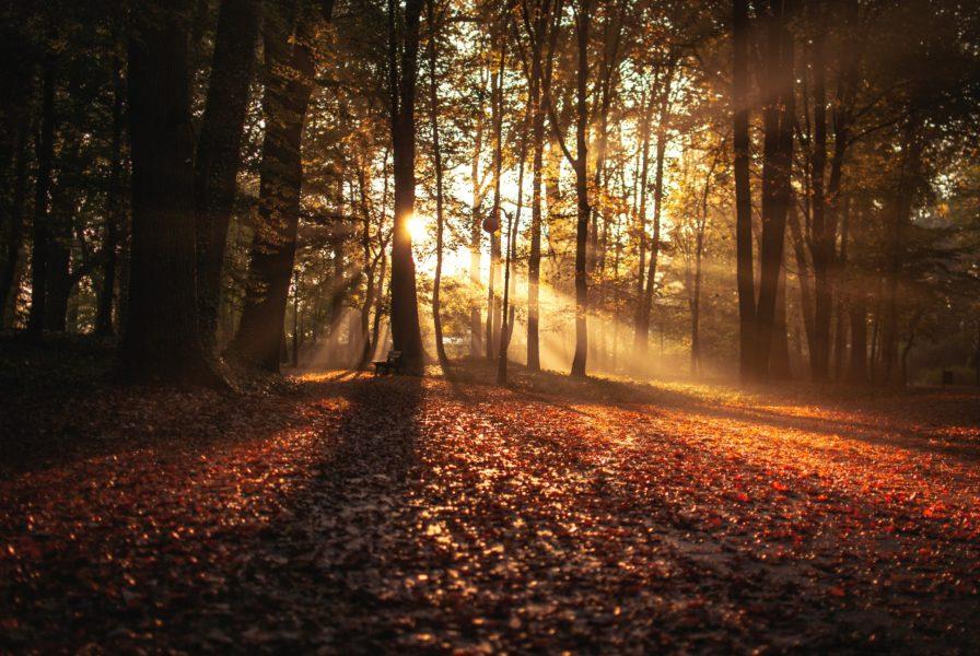 Manu Terra: Événement Méditation
